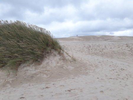 Råbjerg Mile shifting sands