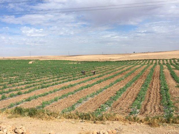 Agricultural landscape, Marrakech to Essaouira