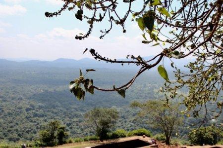 Cultural Triangle landscape from Sigiriya Rock