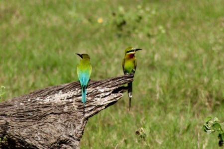 Kaudulla National Park birdlife