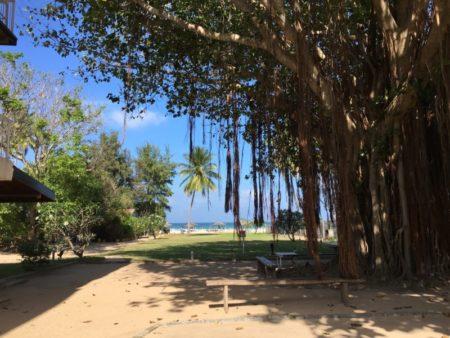 Pigeon Island Resort gardens