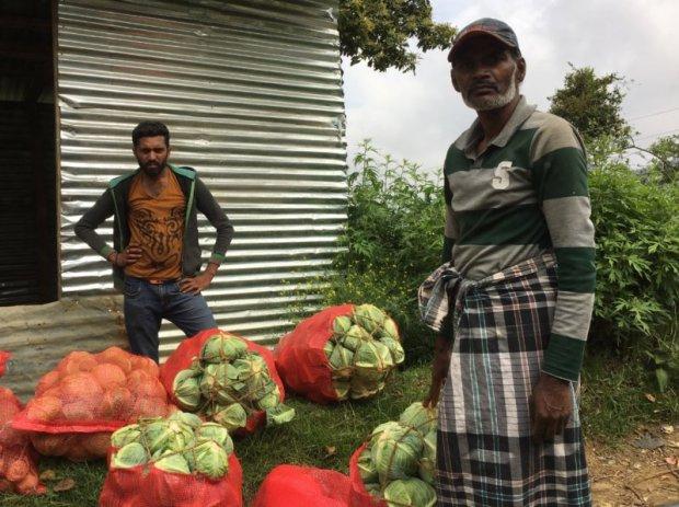 Cabbage planters close to Nuwara Eliya