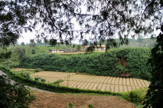 Mirage King's Cottage, view to vegetable fields