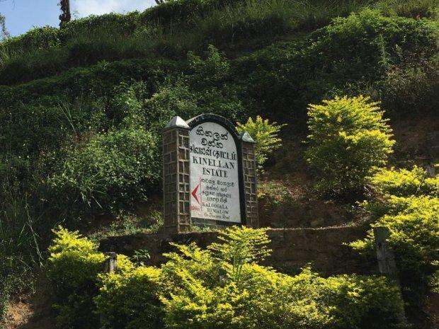 Sri Lankan Ceylon tea estate
