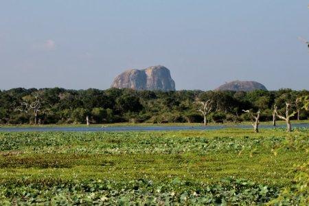 Yala National Park scenery