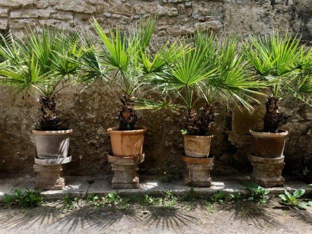 Banys Arabs palms, Palma de Mallorca old town