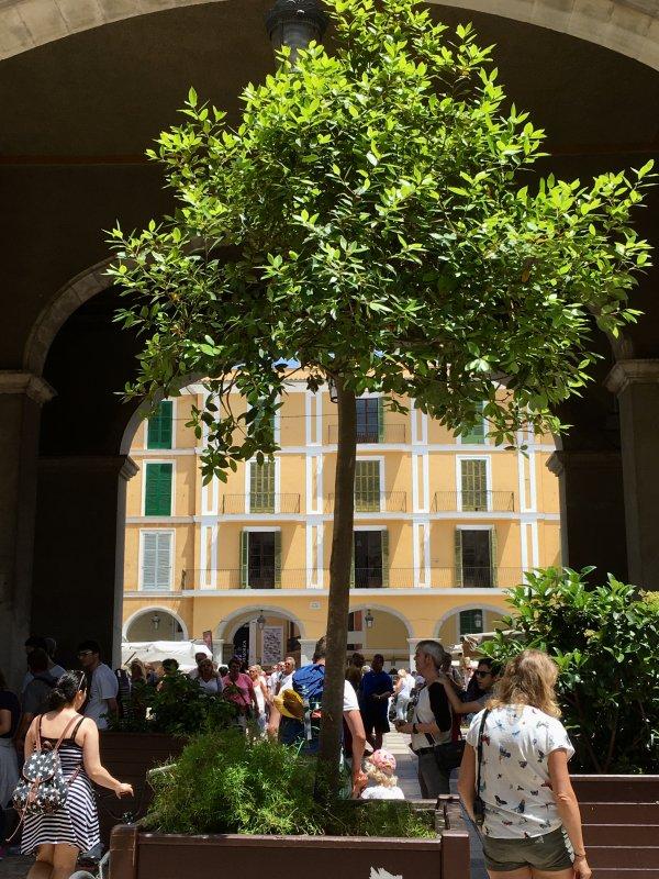 Gate to Placa Major, Palma de Mallorca