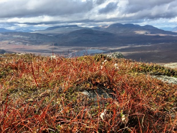 Autumn on Saana fell