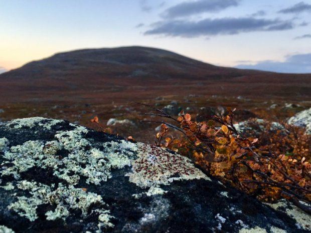 Lichen, reindeer food on Lapland fells