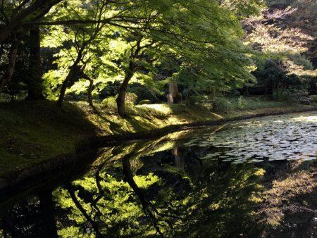 Koishikawa Korakuen Garden pond view
