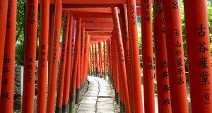 Dreaming about travel: Japanese shrine gates
