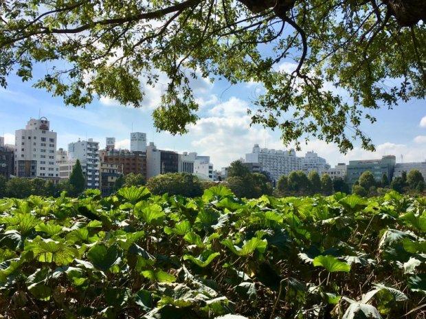 Shinobazu Pond, Ueno Park, Tokyo
