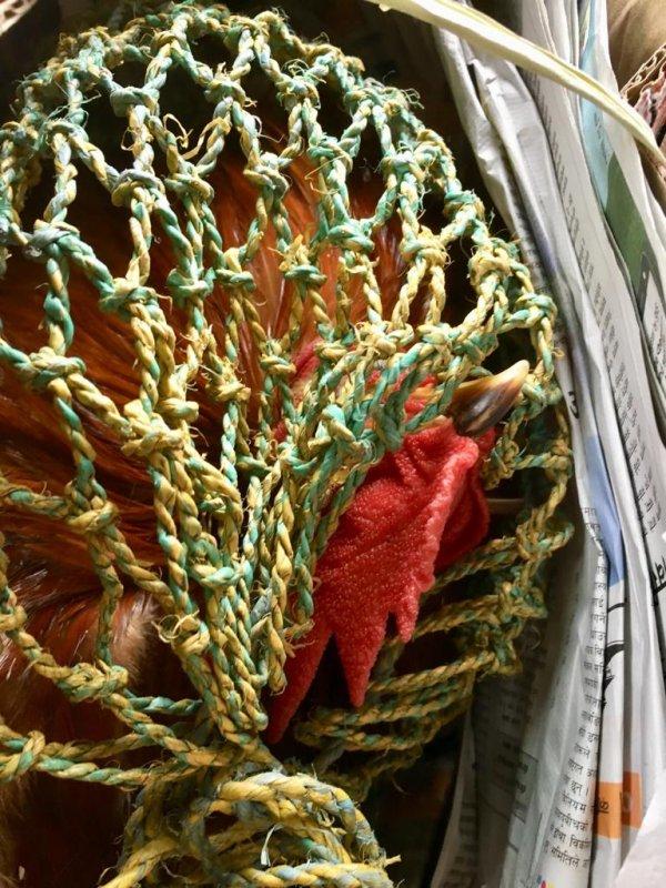 Cock traveling from Pokhara to Kathmandu