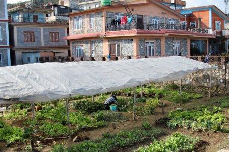 Pokhara garden