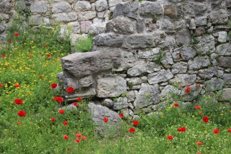 Stari grad Bar ruins and poppies, Montenegro