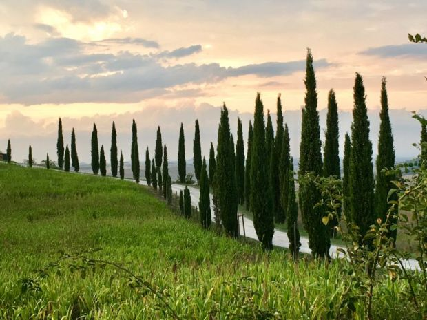 Italy by train and car: Val d'Orcia cypress row