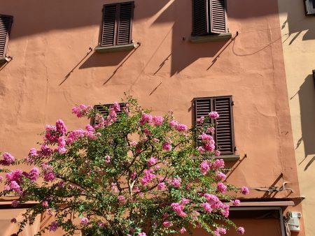 Italy's pretty towns, Castel San Pietro Terme house wall
