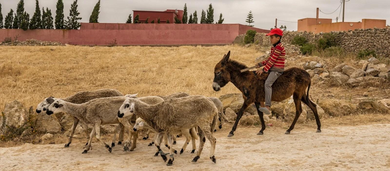 Jeune marocain sur son âne à Oualidia au Maroc - Les Routes du Monde