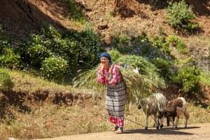 Une paysage marocaine transportant du foin - Maroc - Les Routes du Monde