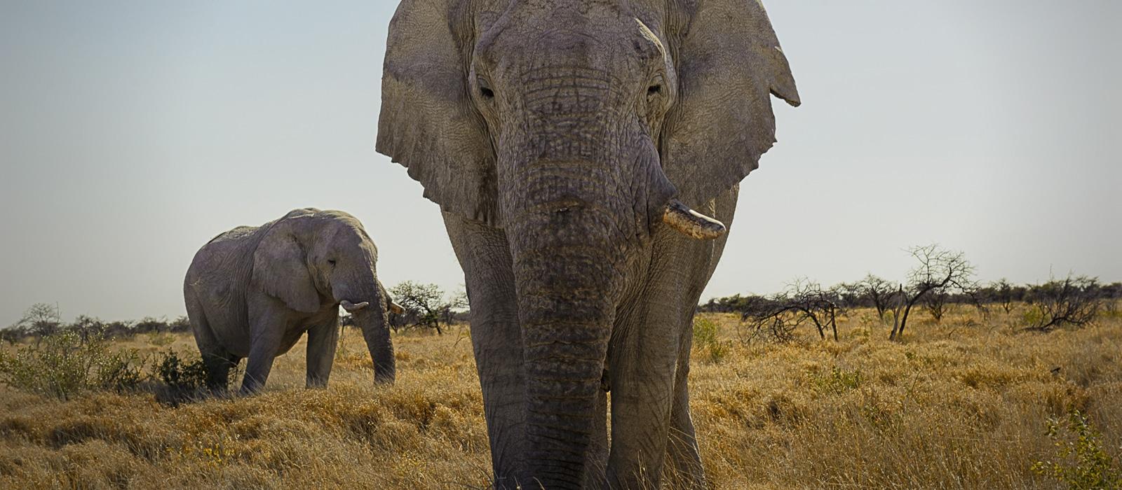 Éléphant, Etosha, Himba, Namibie - les Routes du Monde
