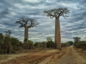 img-diapo-tab - Madagascar-1600x900-17-1.jpg