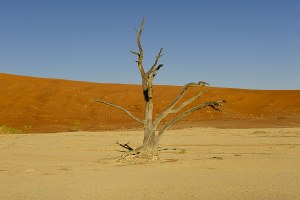 Dead Vlei, Sossusvlei, Namibie - les Routes du Monde