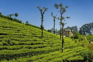 img-diapo-tab - Sri-Lanka-1600x900-16.jpg