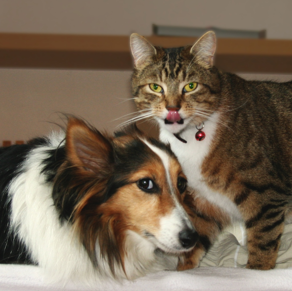 The Difference Between Cat And Dog People Mind Control