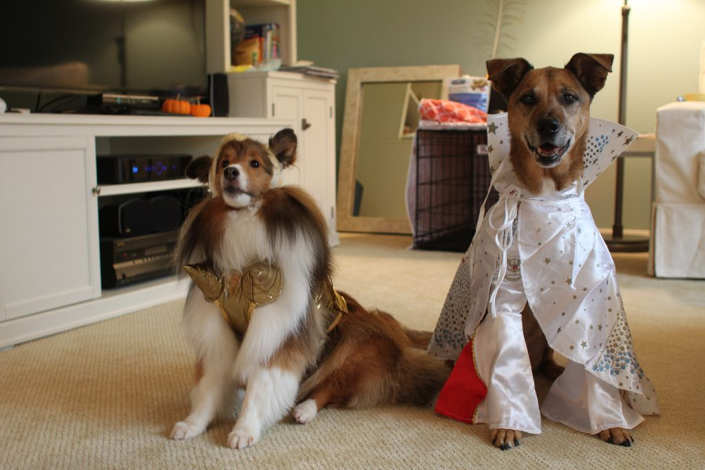 Diy Dog Costumes For All Shapes And Sizes The Dog People
