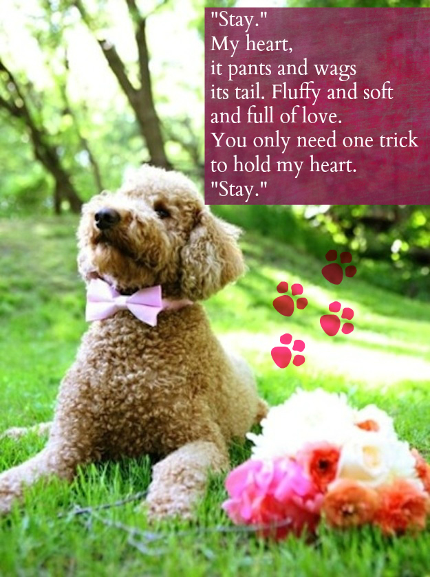 5 Heartfelt And Hilarious Dog Valentines Rover Blog