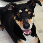 Is A Mixed Breed Dog The Perfect Pet For You The Dog People By Rover Com