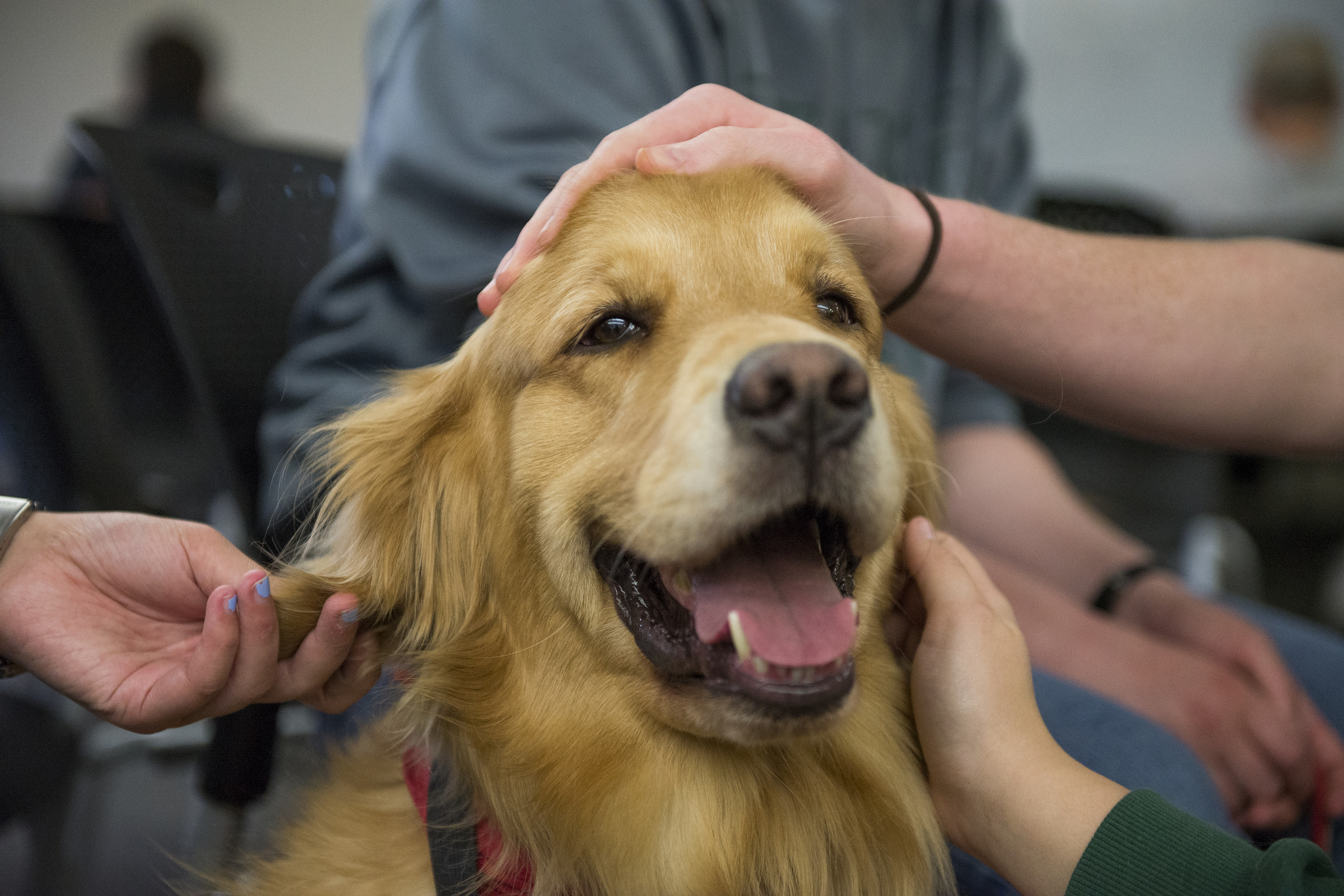 How Service Dogs Help Treat Depression Amp Anxiety