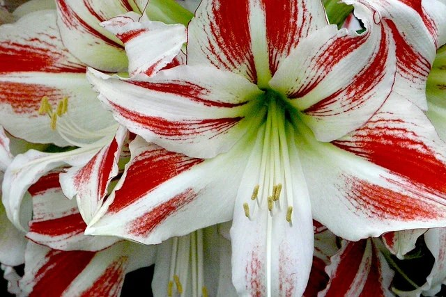Poisonous Flowers 10 Of The Most Popular Varieties That Are Bad