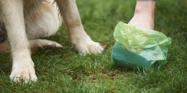 Image result for dogs poop