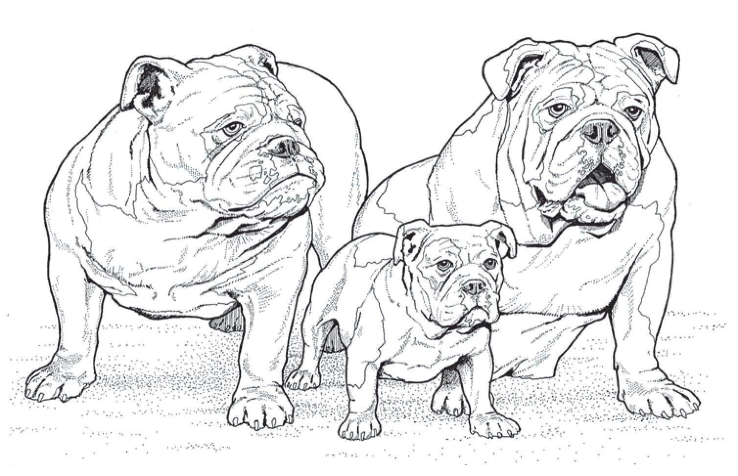 10 New Adult Coloring Books For Dog Lovers To Help Get Your Chill