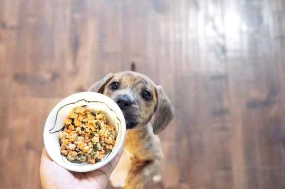 The Best Fresh Dog Food Delivery of 2019: Reviewed by Real Dogs