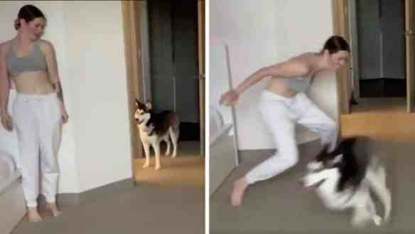 The Simple Joy of This Woman Playing Hide and Seek with Her Dog Is so  Infectious | The Dog People by Rover.com