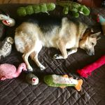 The Very Best Dog Beds For Large Dogs 2020 Updated