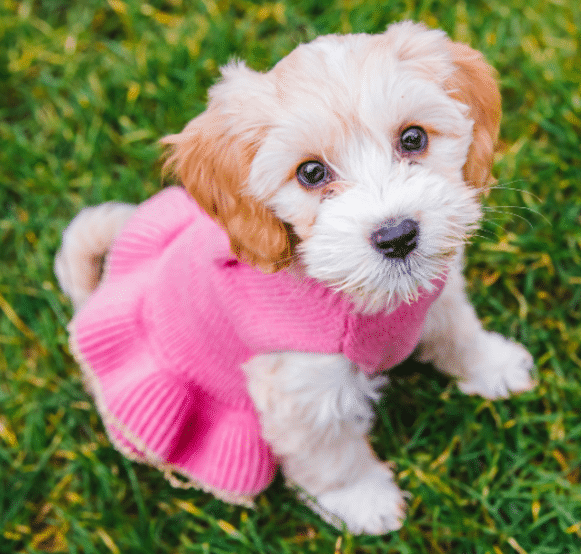 21 Cute Puppy Pictures Nobody Can Resist Not Even You