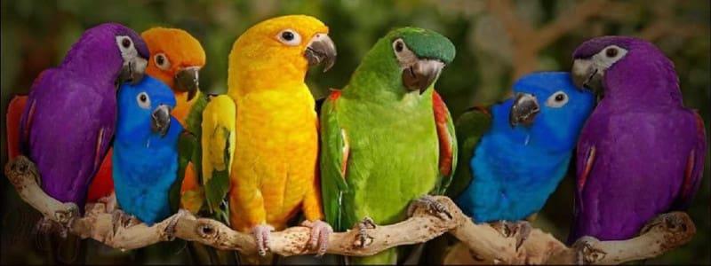 Όλα τα πουλιά του (αντιασφαλιστικού) δάσους κελαηδούν