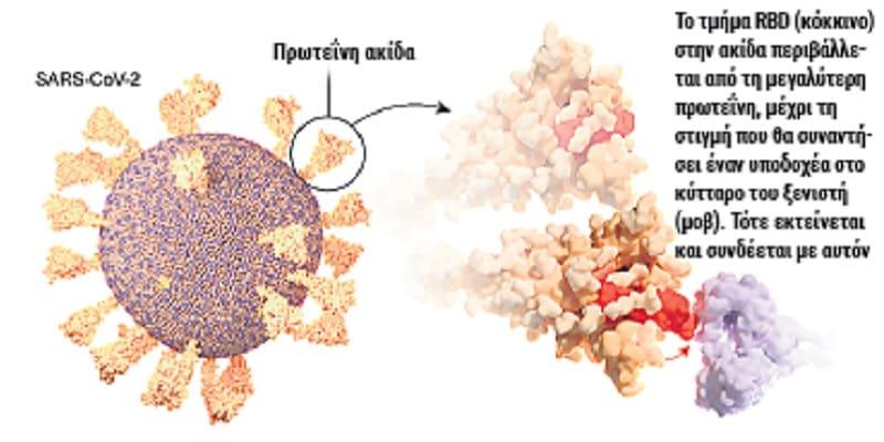 Οι συνθετικές πρωτεΐνες γίνονται η βάση νέου τύπου εμβολίων