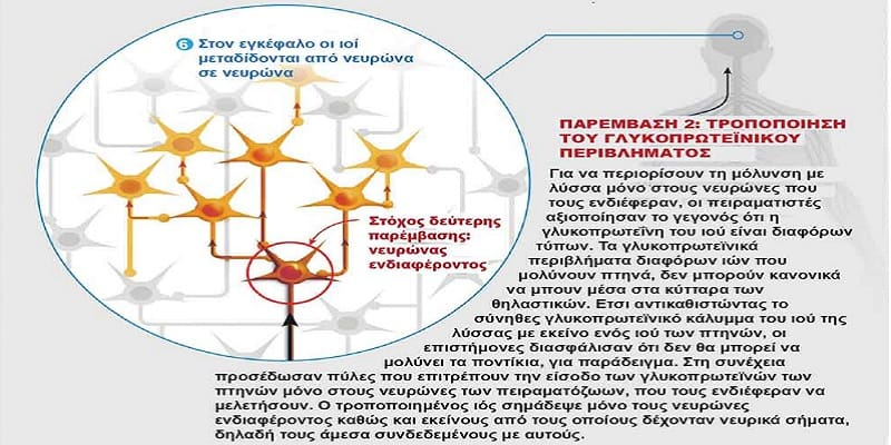 Ο ιός της λύσσας στην υπηρεσία της έρευνας του εγκεφάλου