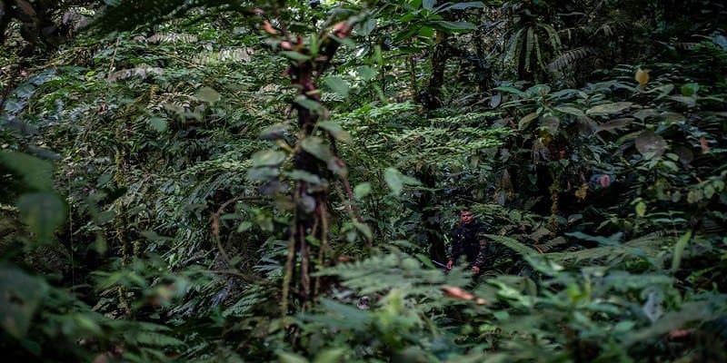 Το FARC ξαναρχίζει το αντάρτικο στην Κολομβία