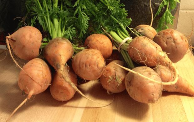 Short Round Carrots