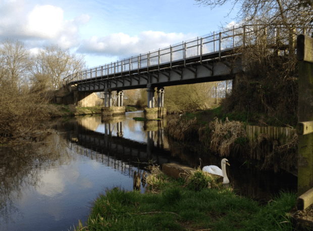 Swan on the River Bure and Bure Valley Railway