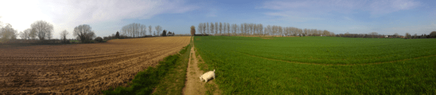 Walking the dogs in Norfolk country lanes