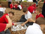 We looked for lots of different shells (Small)