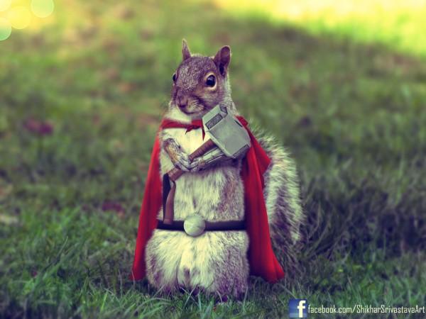 Thor Squirrel by Shikharsrivastava - avengers, marvel comics