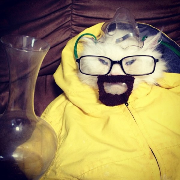 Cat in a Walter White Costume - Breaking Bad