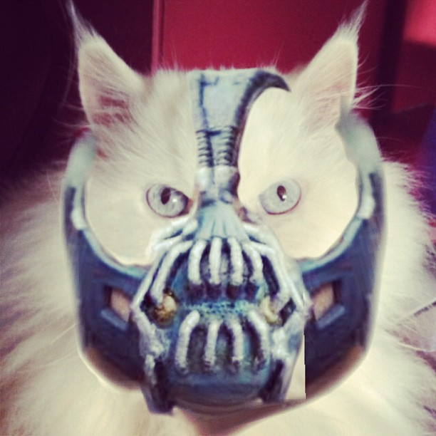Cat with Bane mask